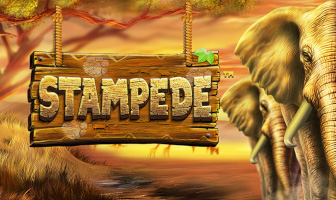 BetSoftGaming - Stampede